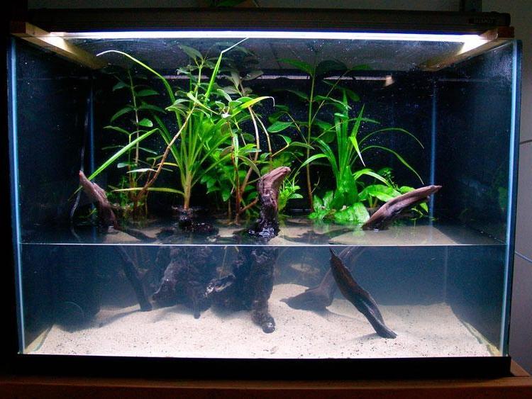 Photo Gallery Aquariums