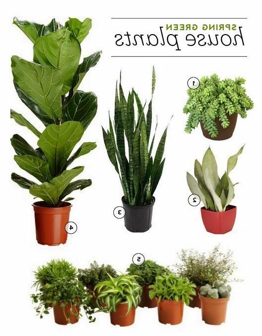 House plants hardy photos - Hardy houseplants ...