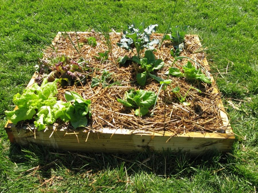 choose plants vegetable gardening in small spaces