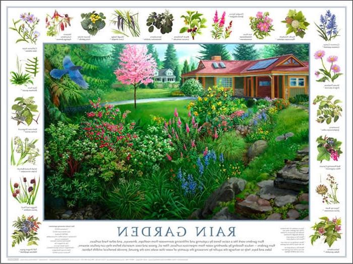 Rain garden designs photos for Home rain garden design