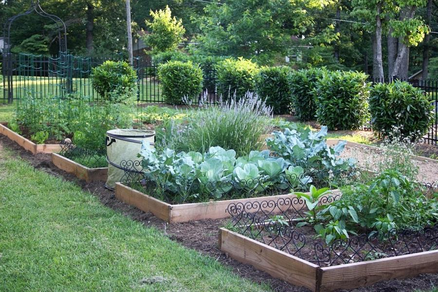 beautiful vegetable garden photos