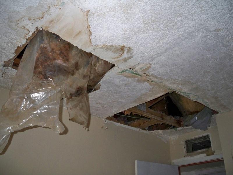 Funny Ceiling Leak Photo