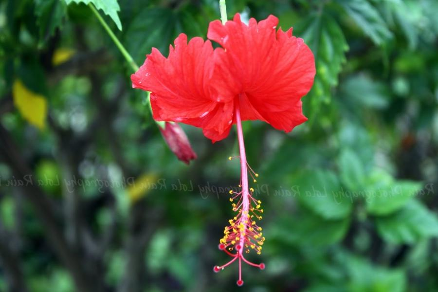 I snapped a few pictures of tropical flowers while in Antigua. I...