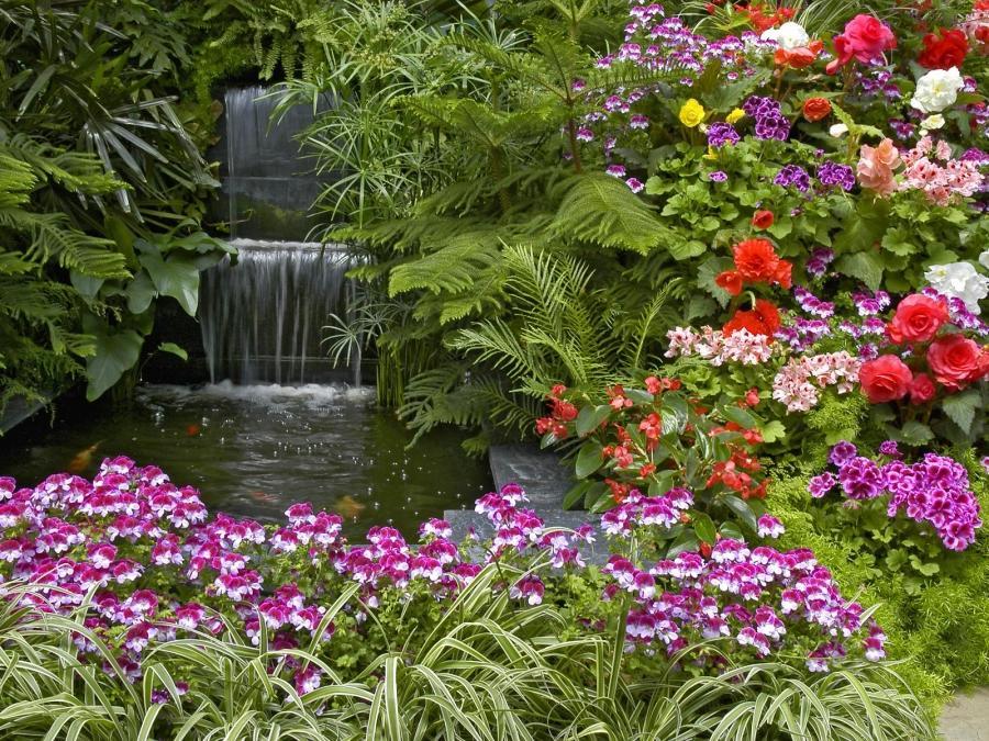 Kerala garden plants photo gallery