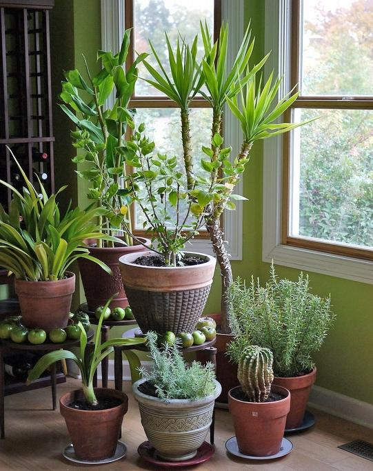 Photos Of Tropical Plants House Plants