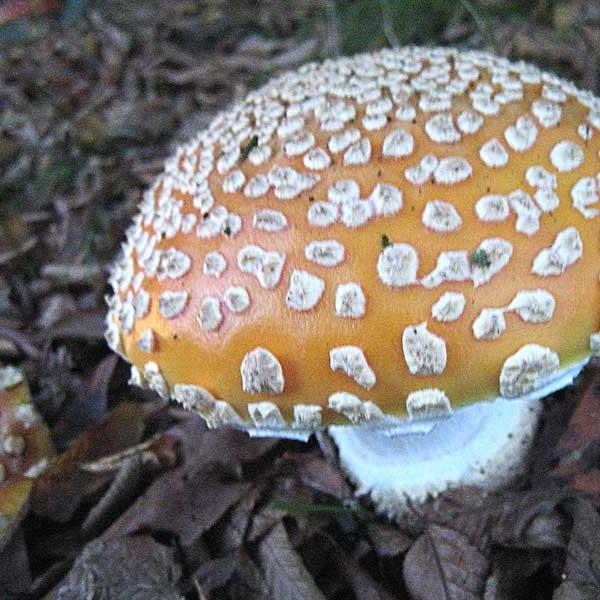 Bc Mushroom Photos