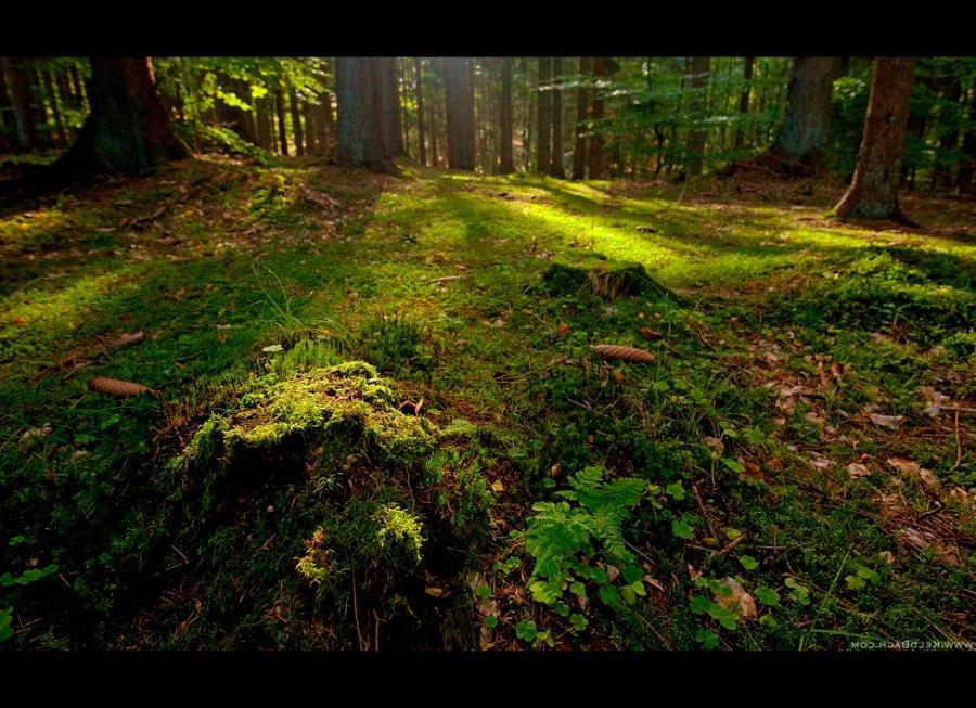 Forest floor photos