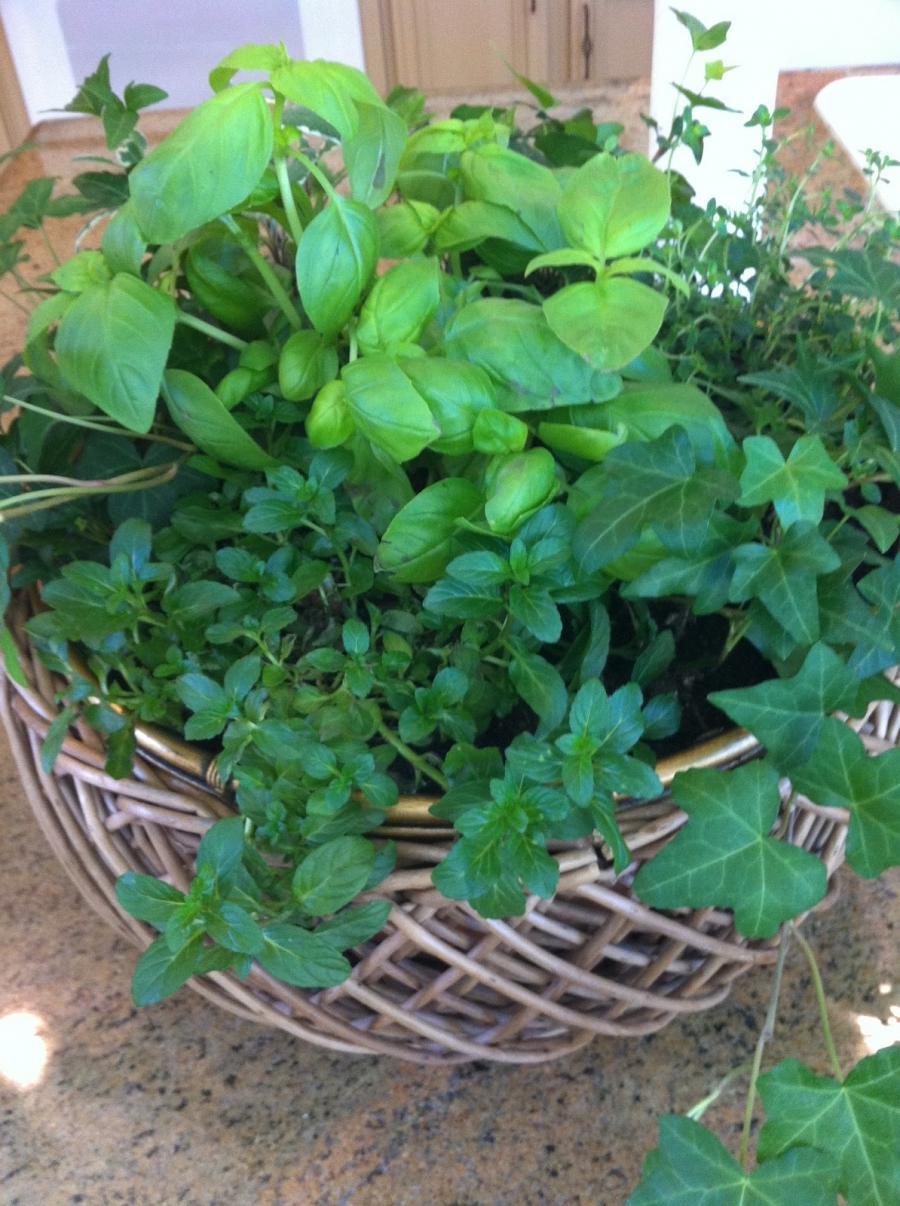 Photos container herb garden