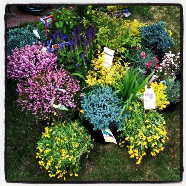 Perennial gardens photo gallery for Partial shade garden designs