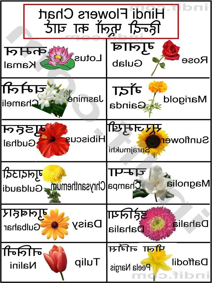 pictures of flowers with names in hindi   impremedia