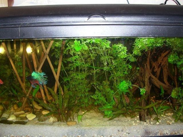 Photo plante aquarium eau douce for Plante pour aquarium poisson rouge