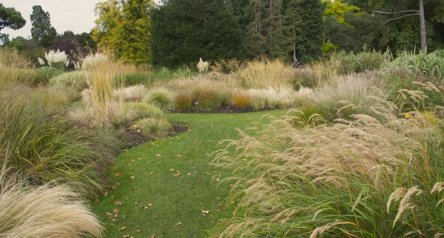 photos of ornamental grass gardens