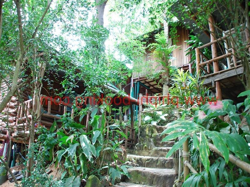Tropical garden pictures photos