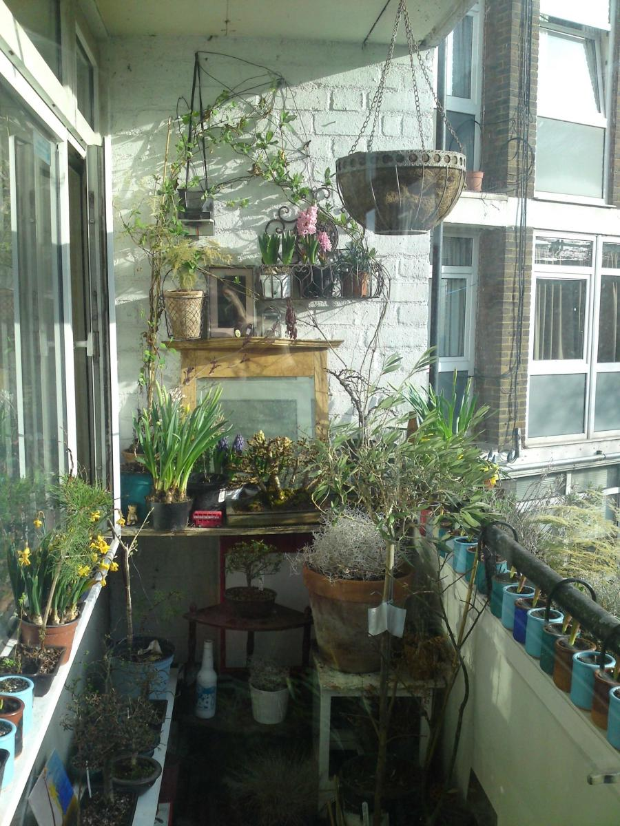 Tag Archives: balcony gardening