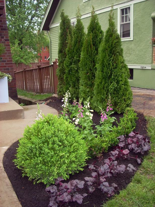 Garden Plants Shrubs Photos