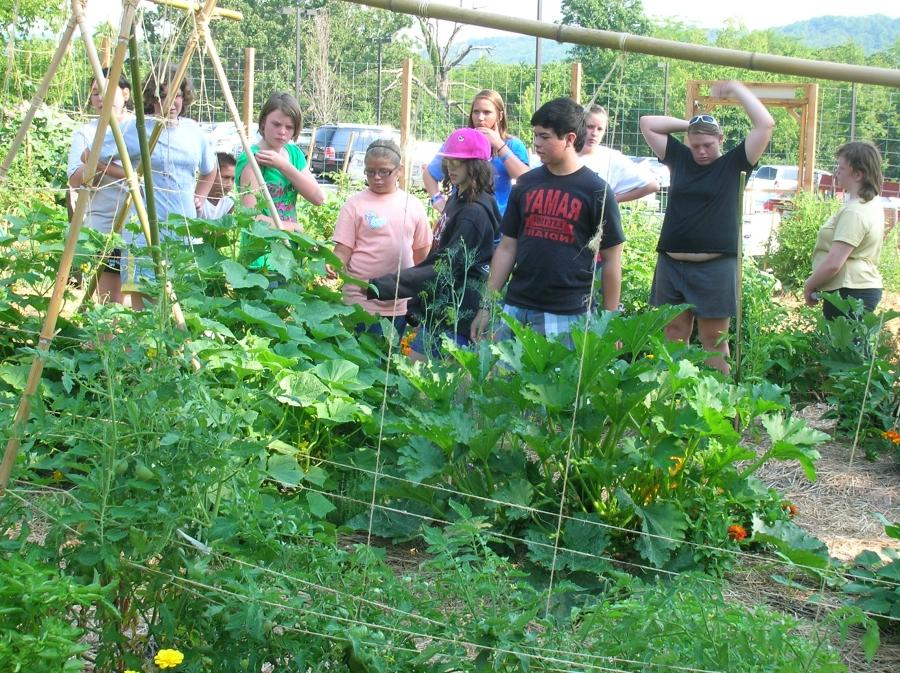 Photos Of Community Gardens