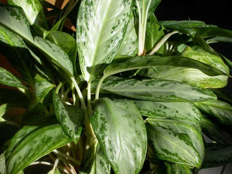 House plant photos and names - Green house plants names ...