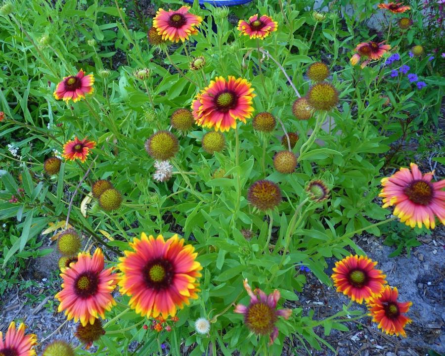 native florida flower photos