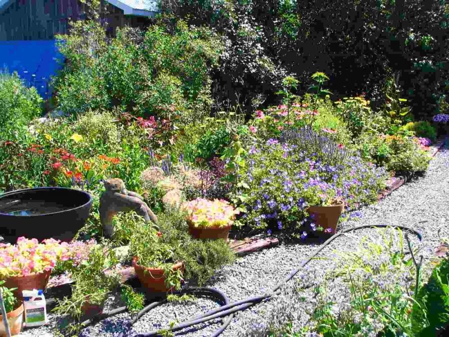 Backyard garden ideas photos