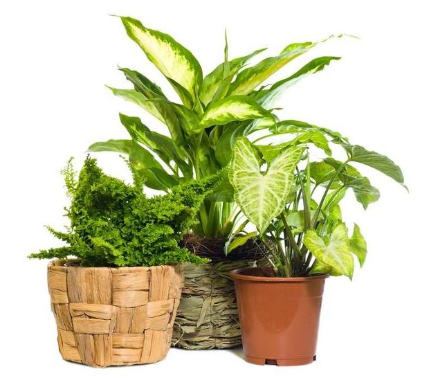 28 best common houseplants piante da appartamento immagini hairstyle gallery best 20 ivy - Cool looking house plants ...