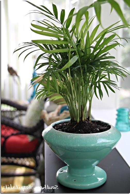 Photos And Names Of Common House Plants