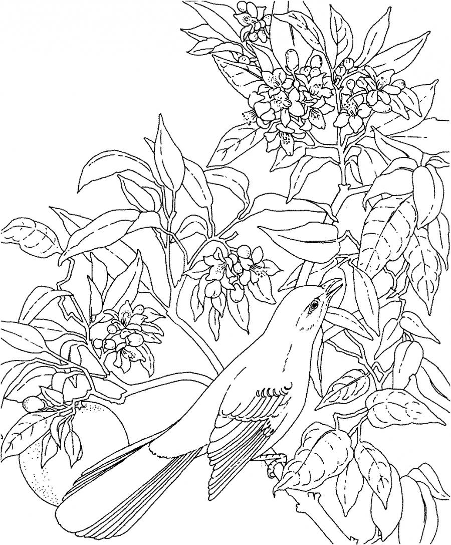 Florida state bird coloring pages ~ A photo of florida state flower
