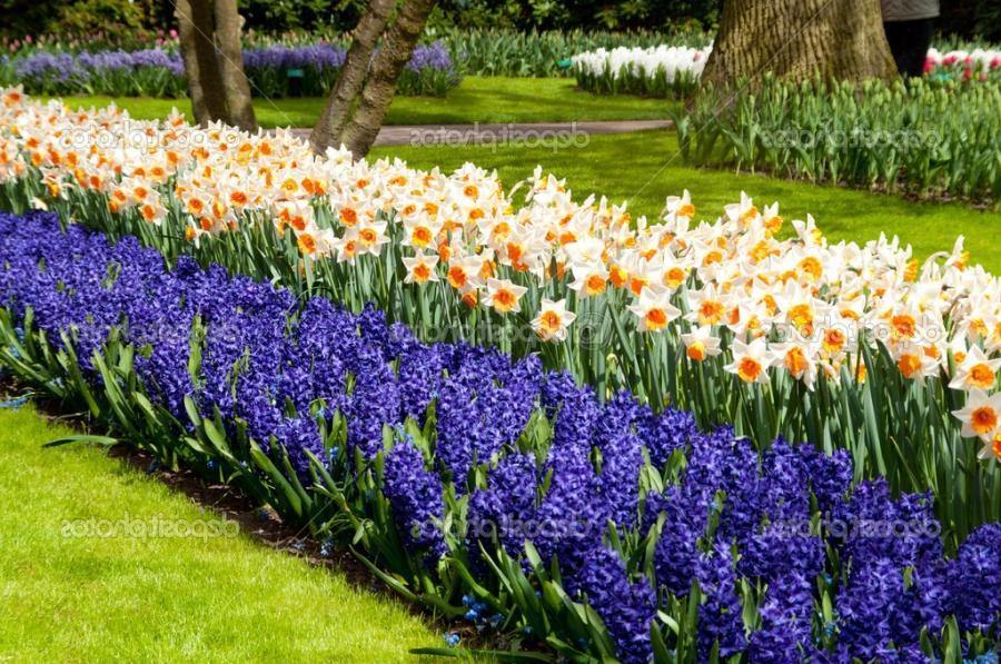 Home flower garden photos