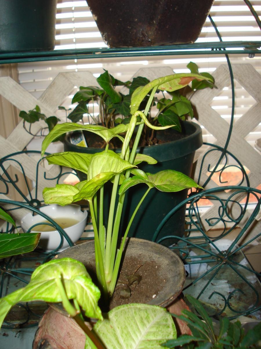 68700ff953004c771772f3ac5a740540 Red Indoor Houseplants on indoor orchids, indoor ferns, indoor palms, indoor trees, indoor plants, indoor roses, indoor organic gardening, indoor shrubs, indoor spices, indoor seedlings,