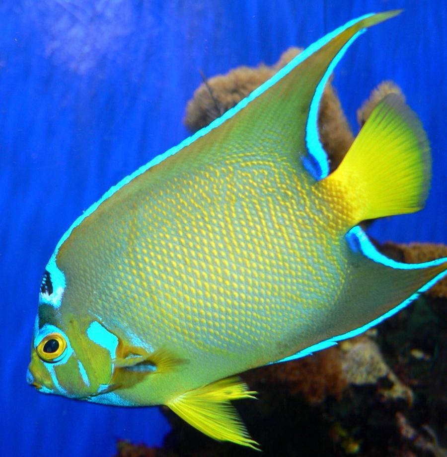 Saltwater fish photos aquarium for Saltwater fish species