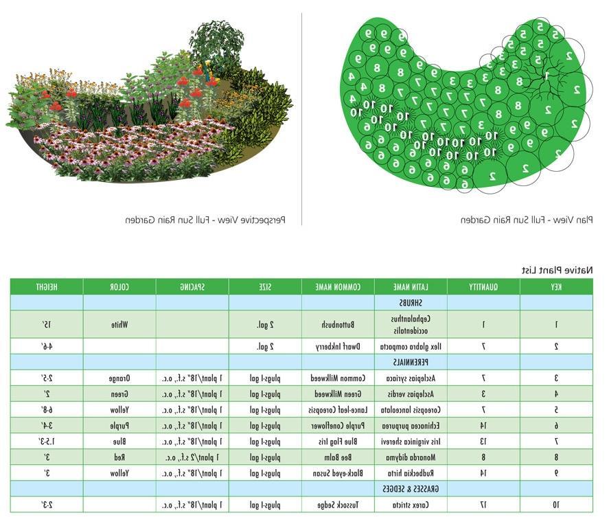 Rain garden designs photos