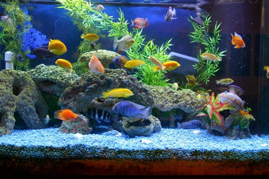 Different types aquarium fish photos Types of fish aquarium