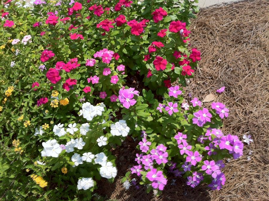 Small Flower Bed Photos