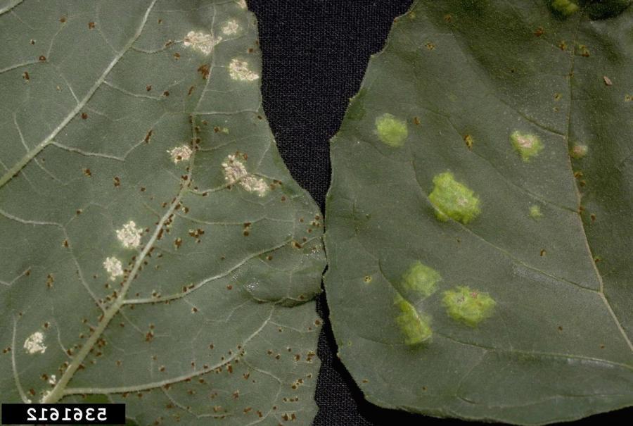 House Plant Disease Photos