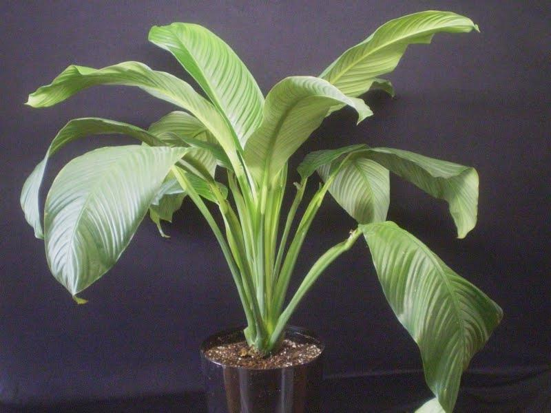 identify house plants leaves photos