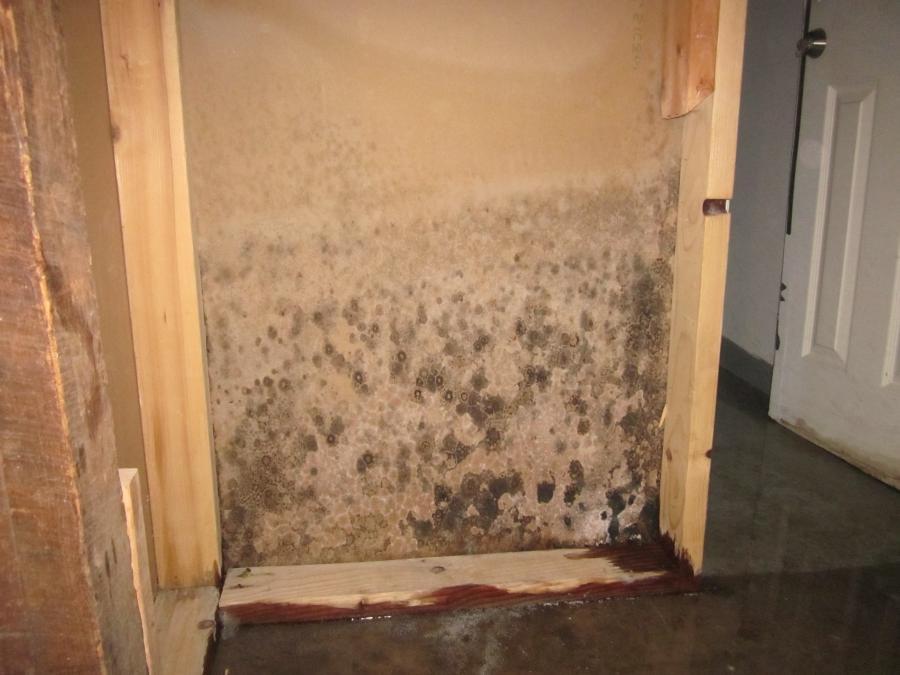 drywall mold photos