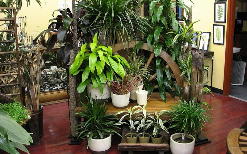 House plant photos names - House plant names with pictures ...