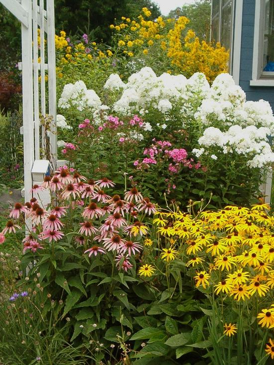 Perennial flower garden photos