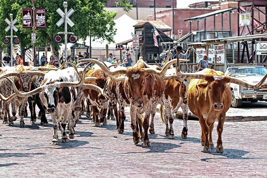 Cowtown Stockyards Photograph