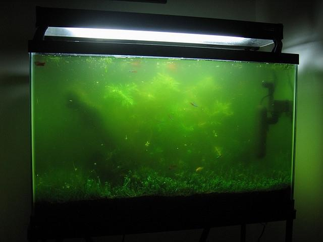 aquarium algae photo picture