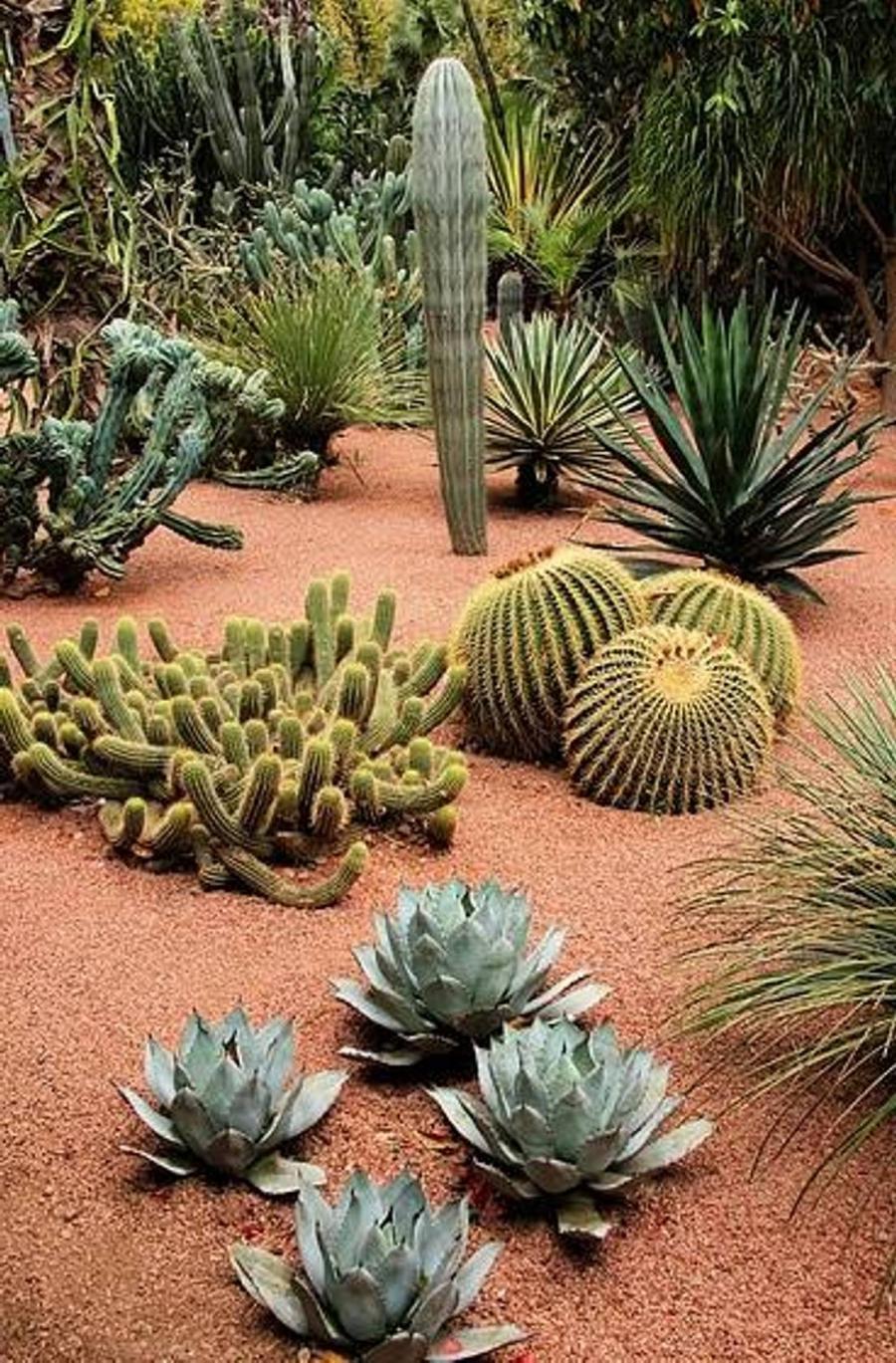 Cactus Garden Landscaping