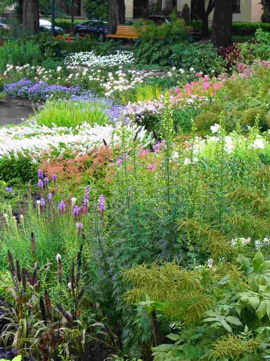 Perennial garden beds photo for Free perennial flower garden designs