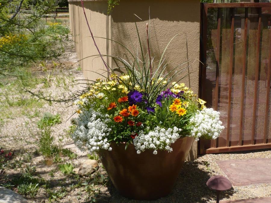 potted desert landscape winter flowers glass