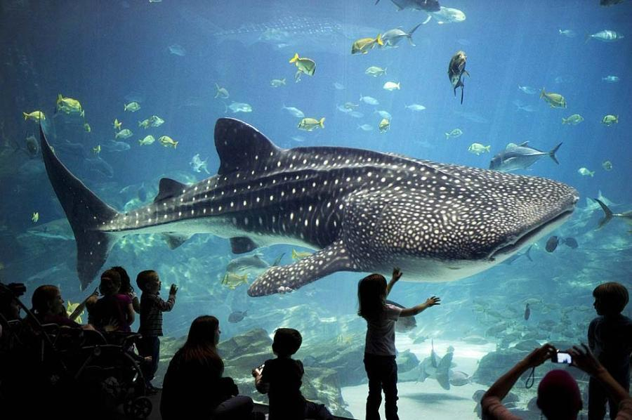 best aquarium photos