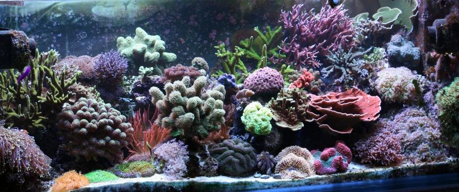 Aquarium filled densely with corals in many shapes, and bright...