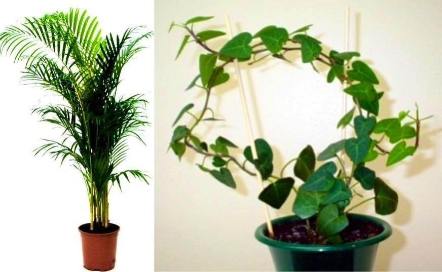 beautiful house plants photos