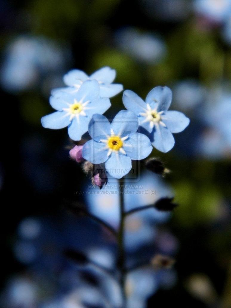 Small blue flowers photos small blue flower by oneshadowtear izmirmasajfo