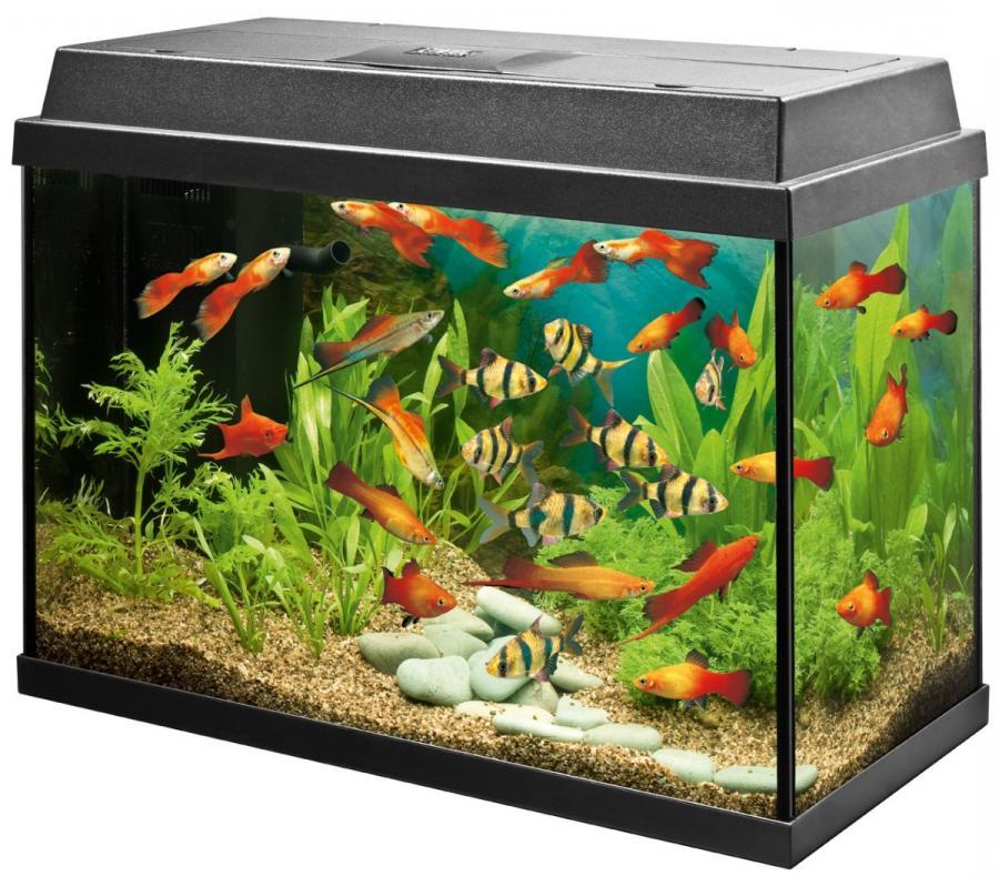 Fish aquarium photos for Fish aquarium supplies