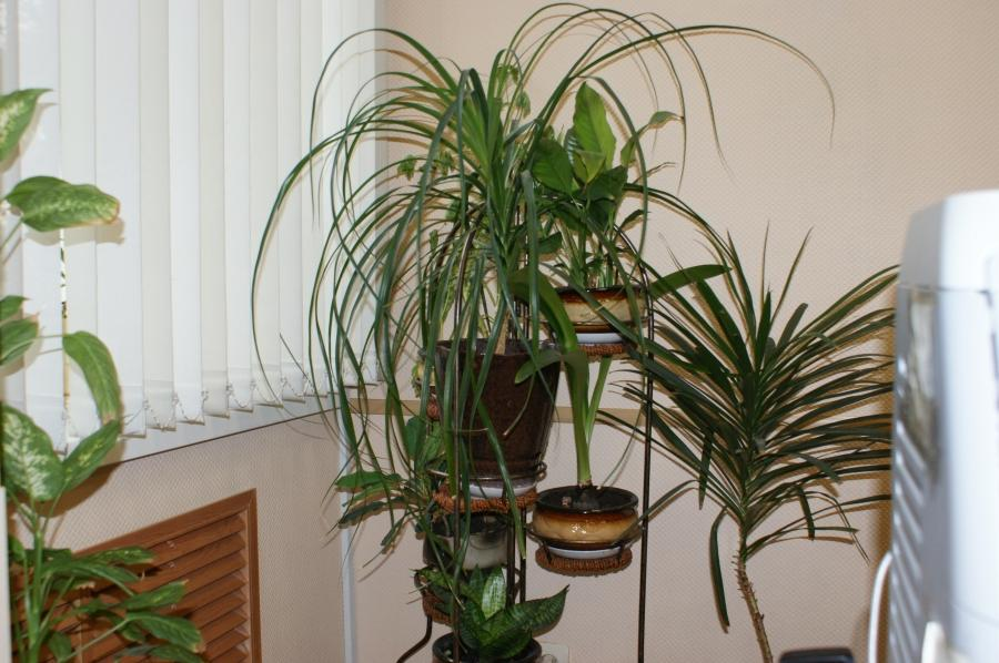 Common house plants photo types - Home plants types ...