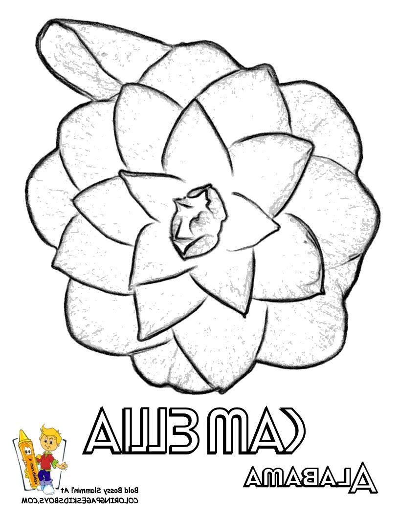 Photo of the alabama state flower