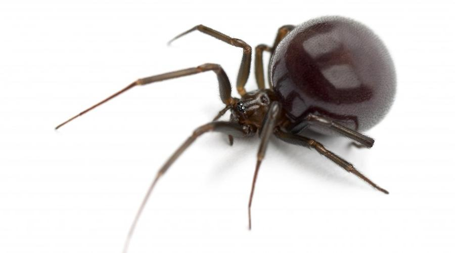 Poison Control Utah >> Photos of house spiders
